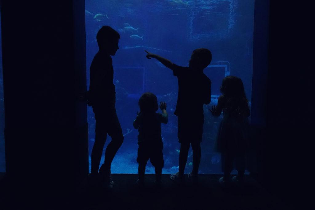 Nemo Aquarium at Epcot