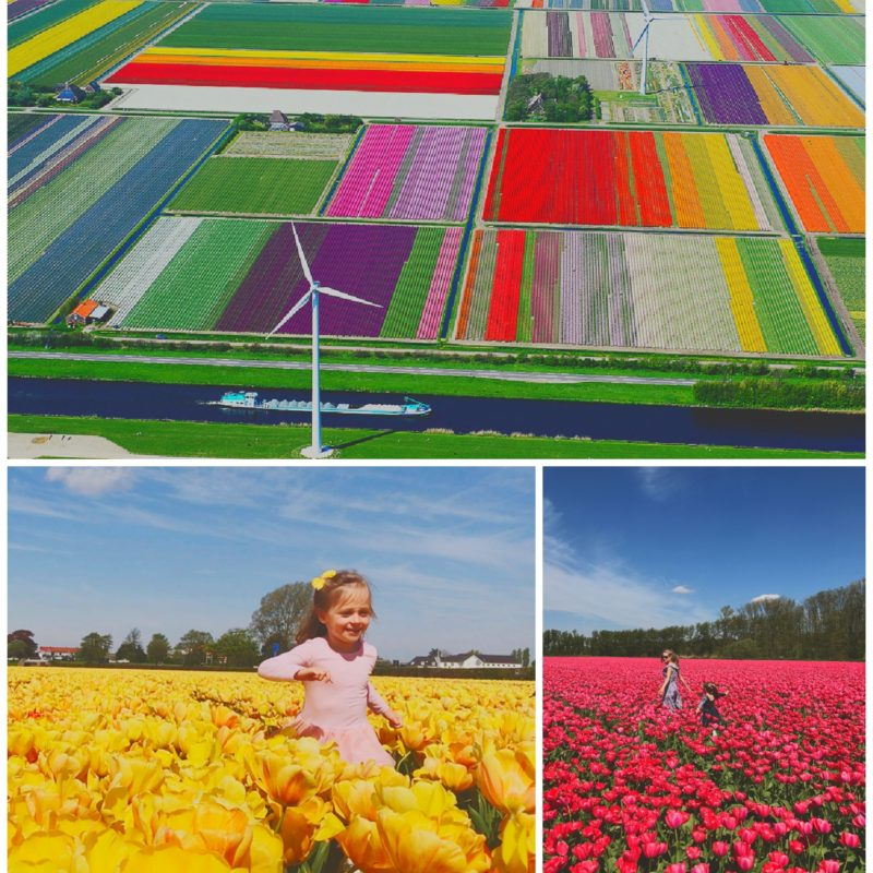 the netherlands tulip fields