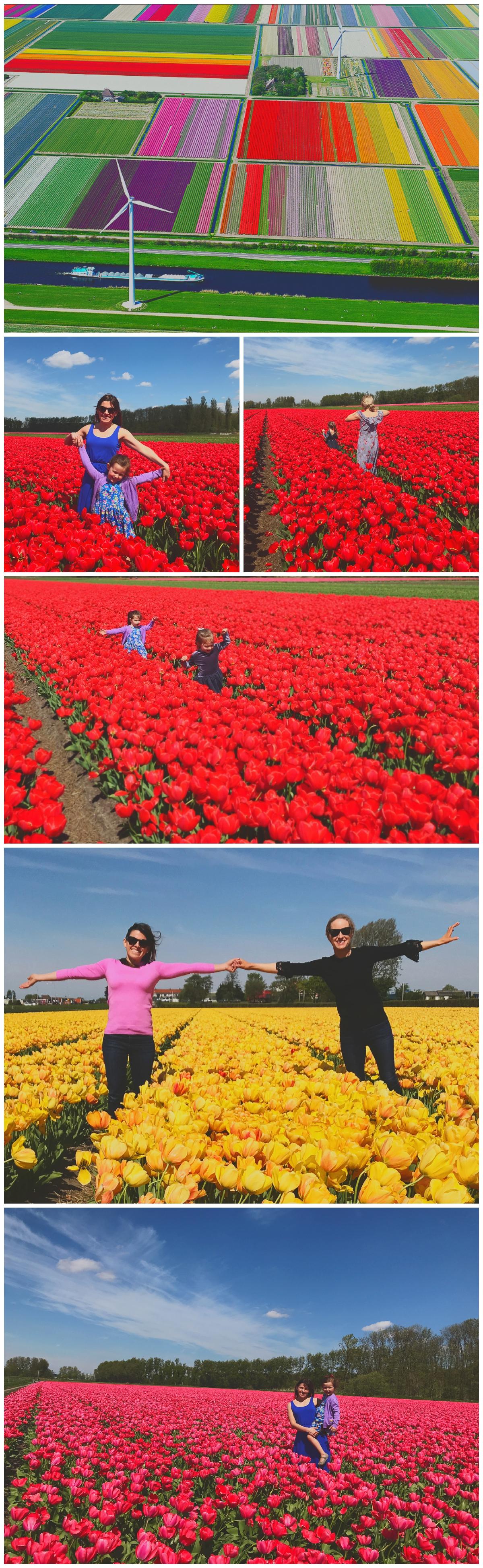 lisse netherlands tulip fields